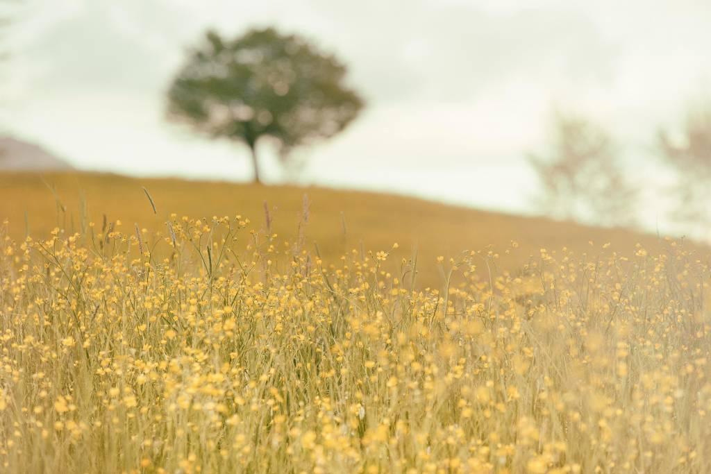 Naturaleza y Ayurveda