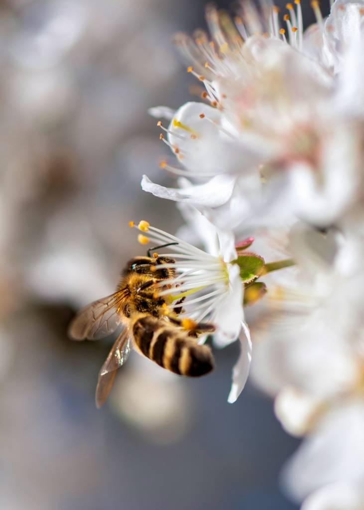 MLa miel en Āyurveda, cuidar la vida y el planeta