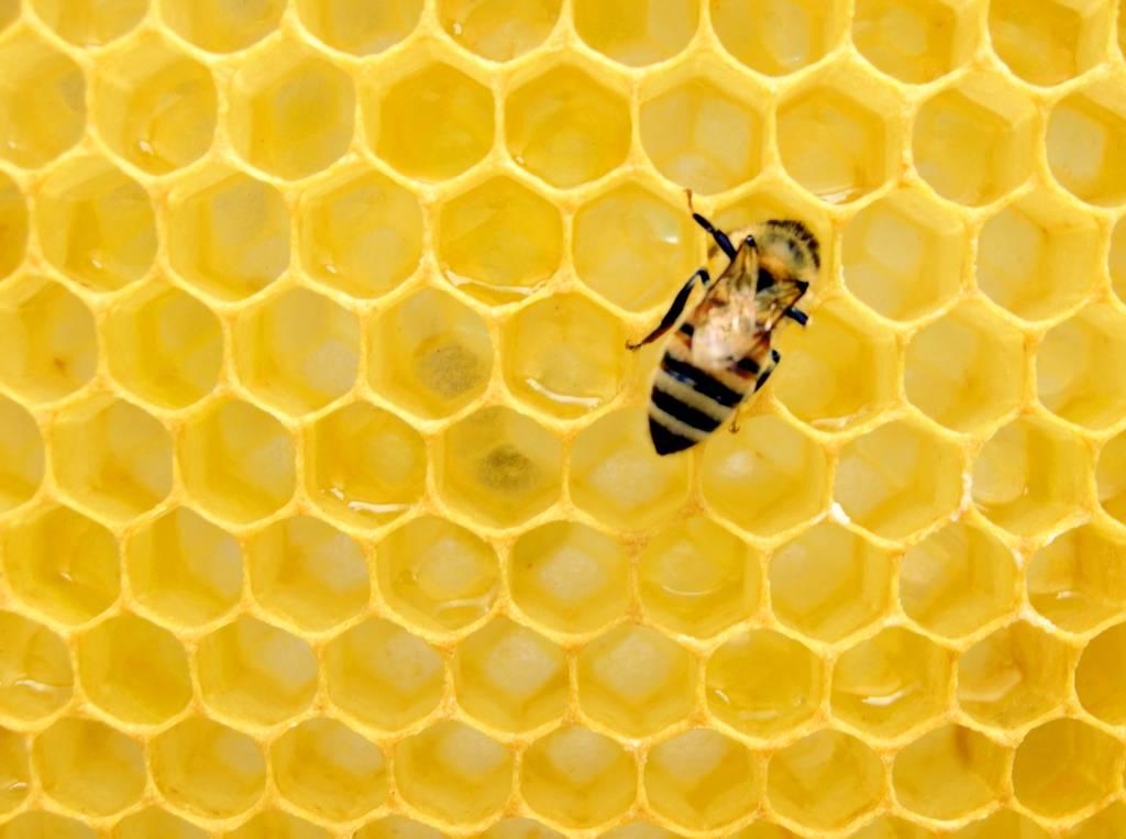 La miel en Āyurveda abejas