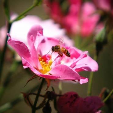 Primavera y alergias en Āyurveda: prevención y tratamiento