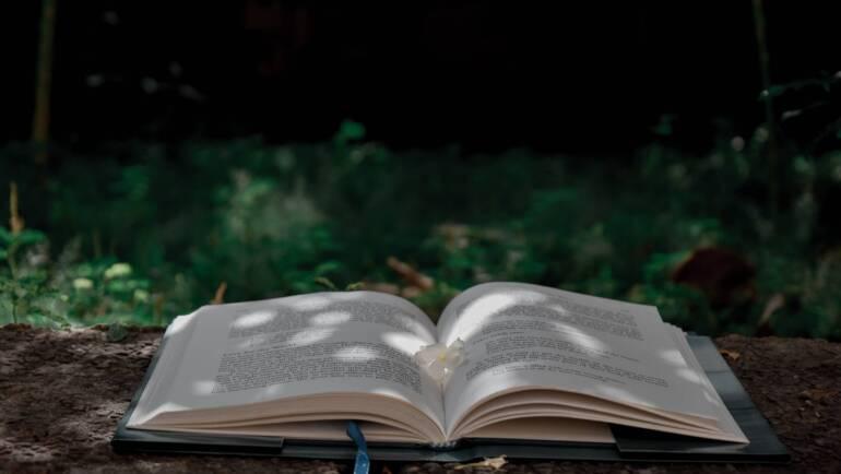 Aprender Ayurveda: experiencias de una vaidya